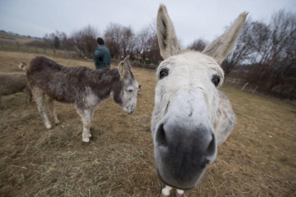 Weil eine Tierhalterin ihre Esel und co. auf einer geschützten Wiese weiden lies, sollte sie 4900 Euro zahlen.