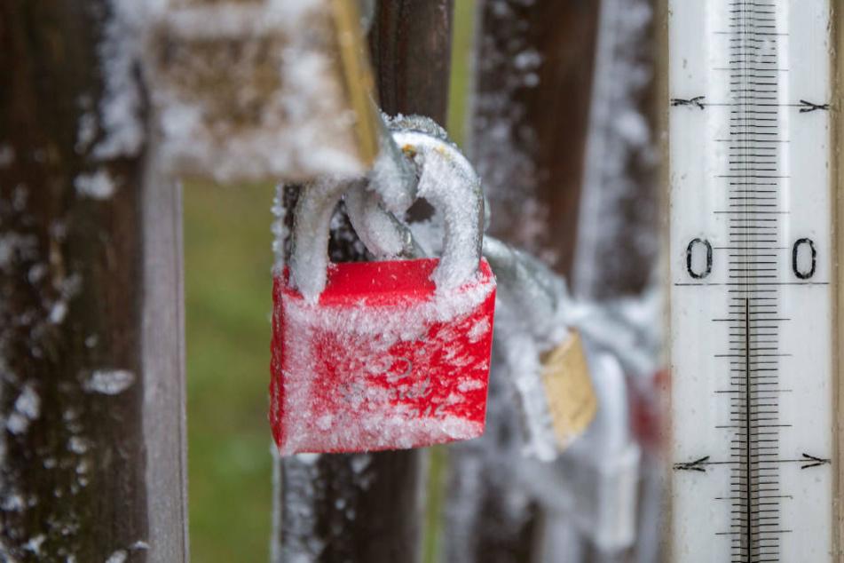 Ab Dienstag sollten die Pflanzen wieder geschützt werden! Frostgefahr!