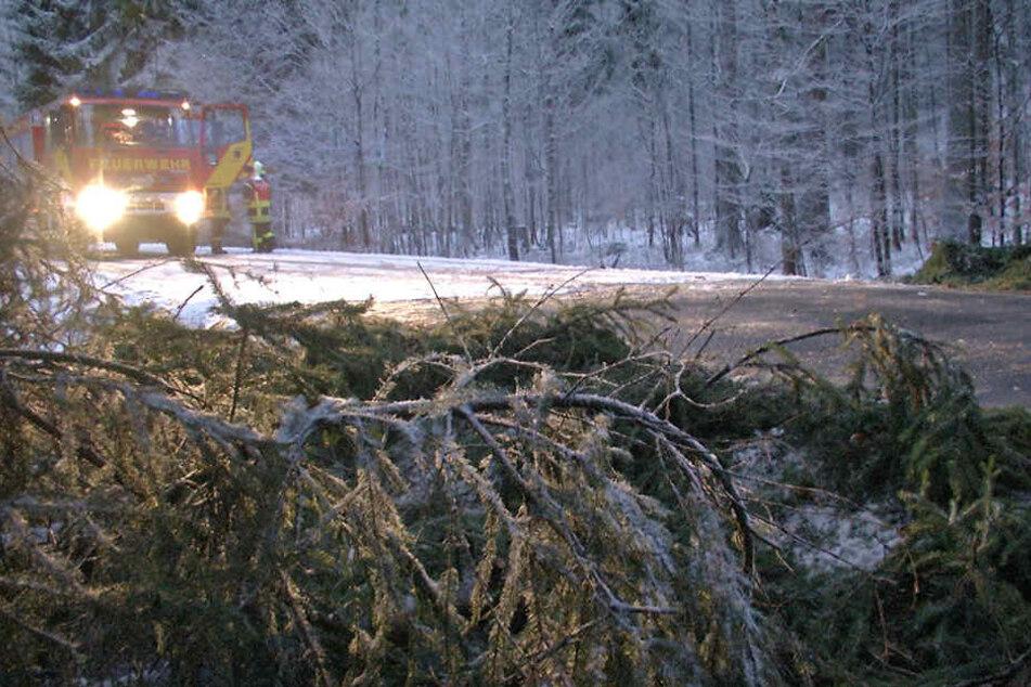 Ein Wintergewitter knickte am Dienstag im Bereich Bärenstein schon zahlreiche Bäume um.