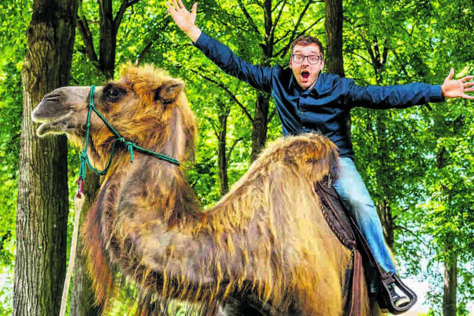 Verrückt! Hermann Tydecks geht in Zittau auf Kamelsafari - und hat Spaß  dabei.
