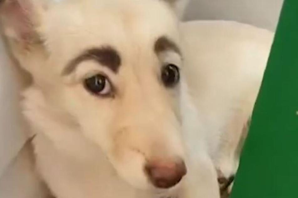 Weltweit lachen sich alle über diesen Hund tot