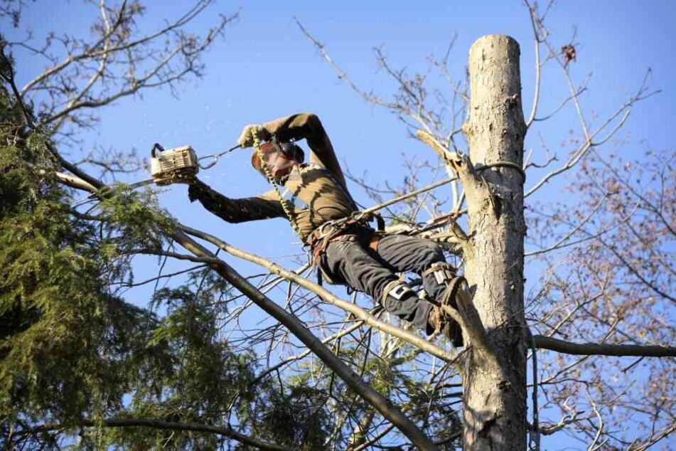 Baumfäller macht falschen Schnitt und stürzt in den Tod
