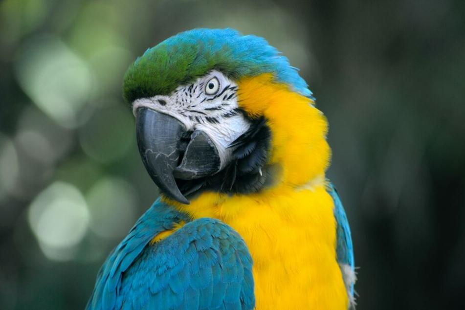 Große Papageien benötigen eine große Voliere und sollten auch nicht in der Küche stehen.