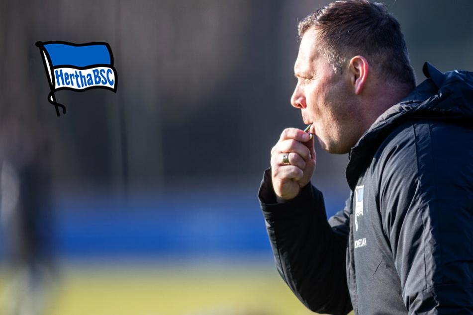 """Hertha-Trainer Pal Dardai richtet Blick nach vorn: """"Alles, was war, interessiert mich nicht"""""""