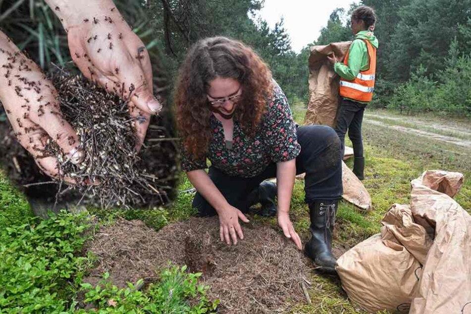 Diese Frau gräbt mit nackten Händen in Ameisenhaufen