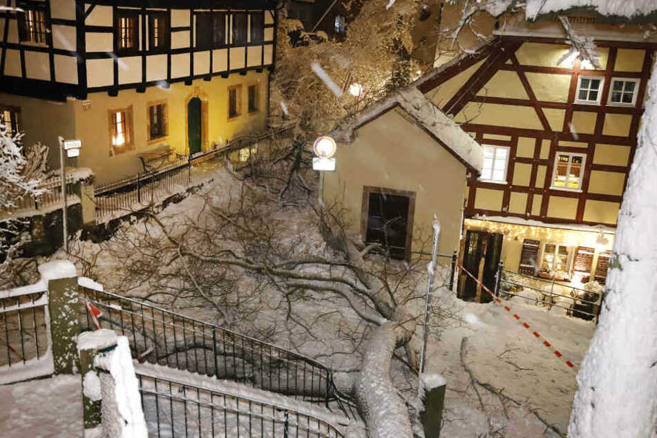 Im Schlossviertel ist eine alte Eiche umgestürzt, das Kellerhaus wurde knapp verfehlt.