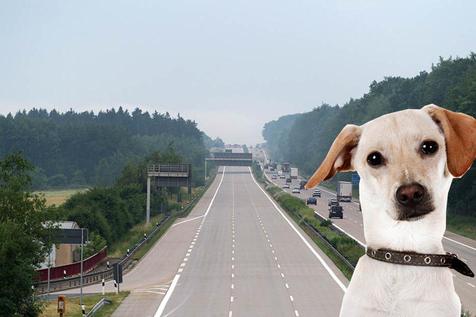 Verirrter Hund sorgt für Vollsperrung der A4