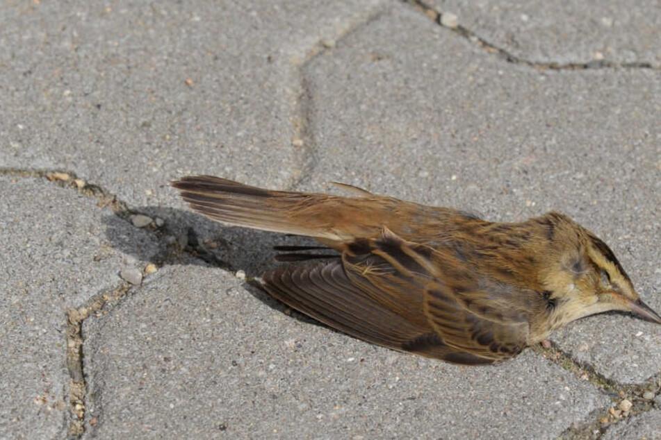 Der Usutu-Virus ist für Vögel tödlich.