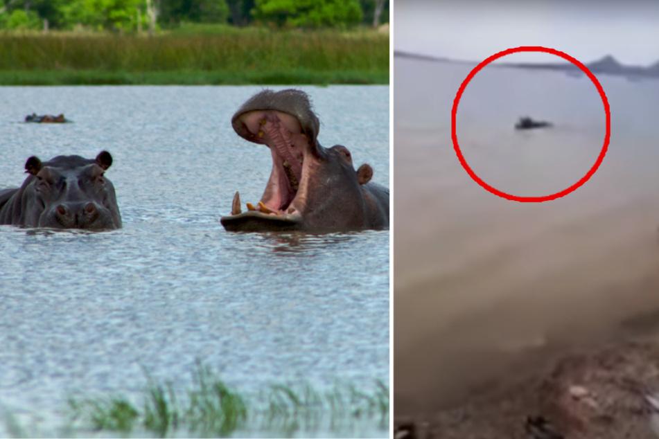 Aggressive hippo drowns boy in Kenya