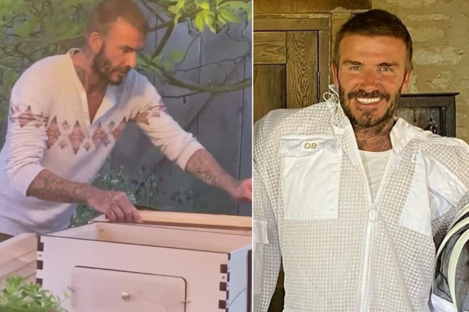"""David Beckham """"obsessed"""" with beekeeping and plans to produce his own honey"""