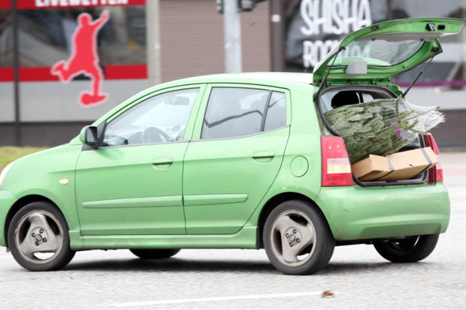 Der 19-Jährige transportierte den Baum in seinem Auto. (Symbolbild)