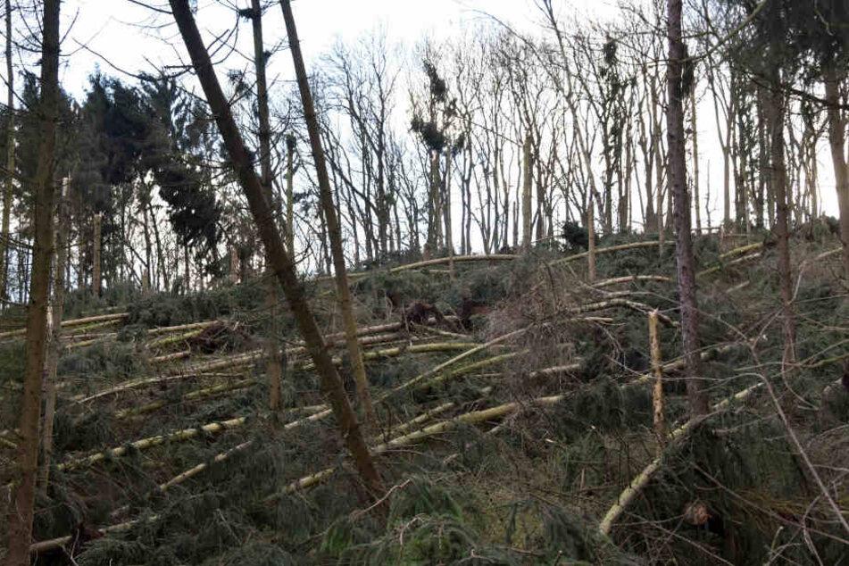 """""""Friederike"""" richtete in Hessens Wäldern großen Schaden an."""