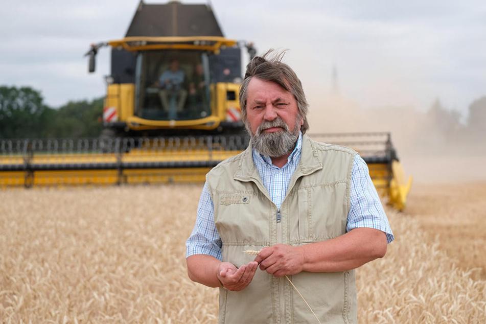 Der Arzberger Landwirt Geert Brandtner (64) steht auf einem Weizenfeld seiner Genossenschaft. Der Wassergehalt des Korns sei inzwischen unter zehn Prozent gesunken, sagt er.