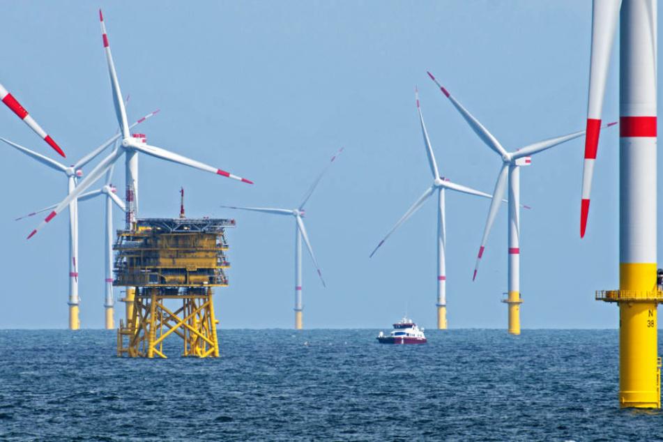 """""""Kosten dramatisch gefallen"""": Wie geht es weiter mit der Windenergie?"""