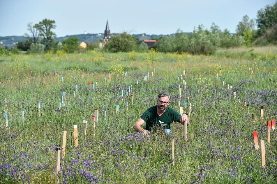 Ronny Scholz (43) vom Baum-Bündnis inspiziert eine Liguster (Heckenpflanze).
