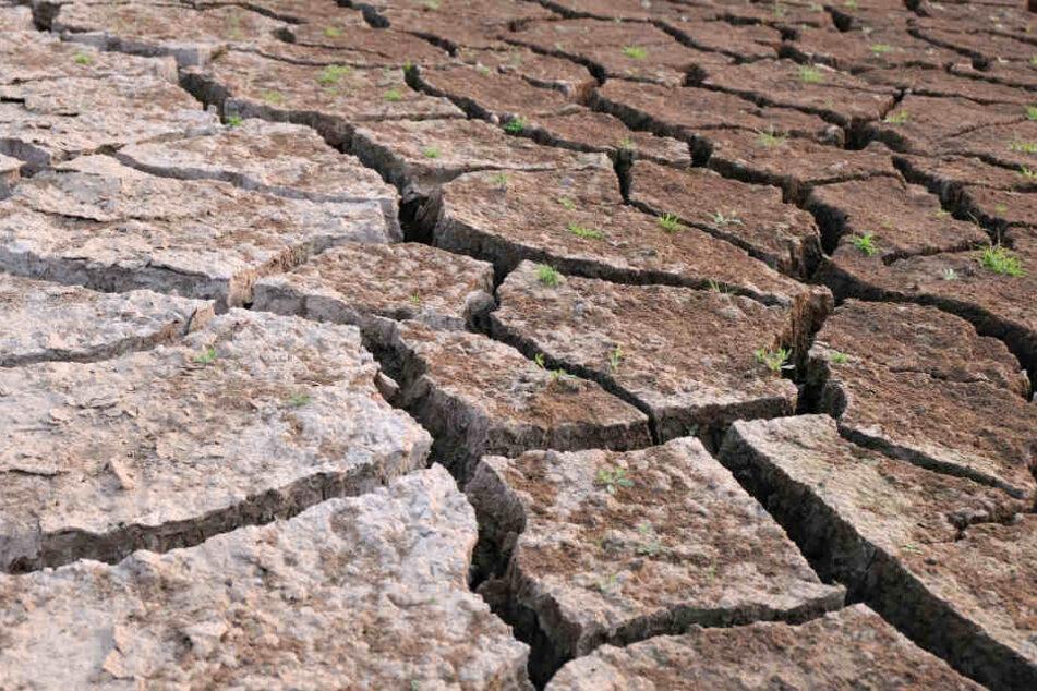 In Teilen der Welt ist mit schweren Dürren zu rechnen. (Symbolbild)