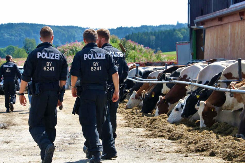 Polizeibeamte sichern Beweismittel an einem Bauernhof in Grasegg.