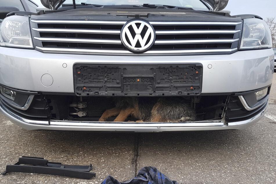 Das von der Polizei Aalen veröffentlichte Foto zeigt einen Hund, der nach einem Unfall im Kühlergrill des Fahrzeugs verschwand und rund 40 Kilometer unbemerkt vom Fahrer mitgenommen wurde.