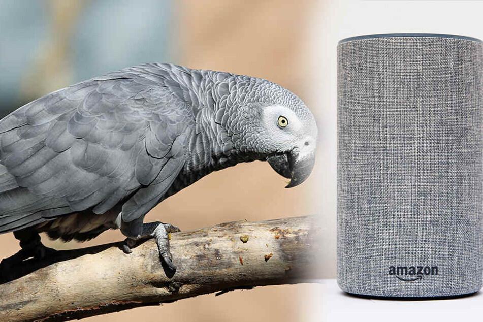 Fluchender Papagei freundet sich mit Alexa an und bestellt kuriose Sachen
