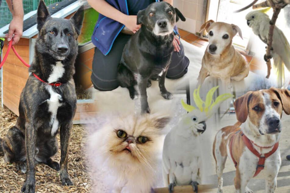 Hunde, Katzen, Kakadus: Diese Tiere suchen ein neues Zuhause