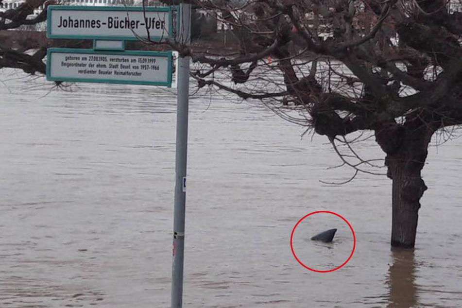 Das Foto der Facebook-Userin Petra Mehring zeigt eine vermeintliche Haiflosse. Es handelt sich allerdings nur um eine Mülltüte.