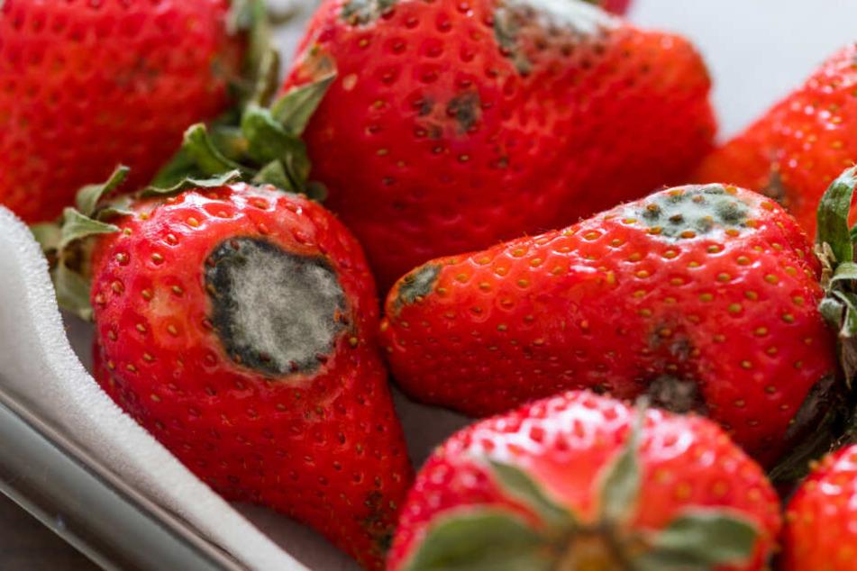 NDR-Verbrauchermagazin: Gefährliche Keime in fertigem Obstsalat entdeckt