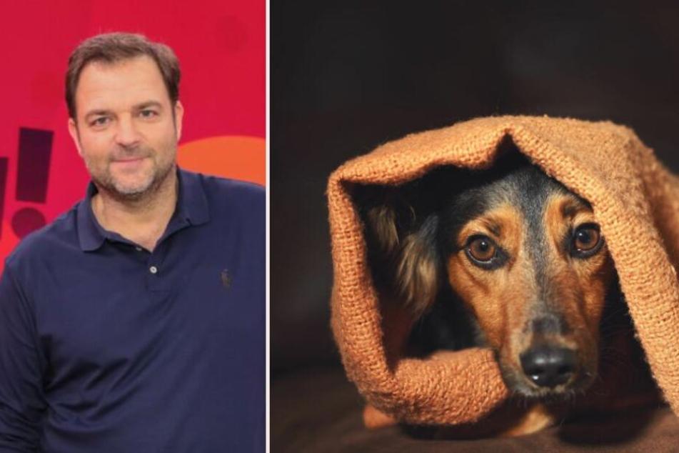 Martin Rütter reicht's: Warum er jetzt auf Hunde verzichtet!
