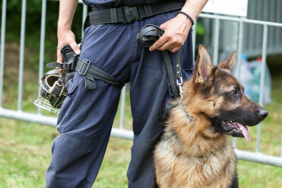 Ein Polizeihund hat versehentlich einen Hotelgast in den Bauch gebissen.