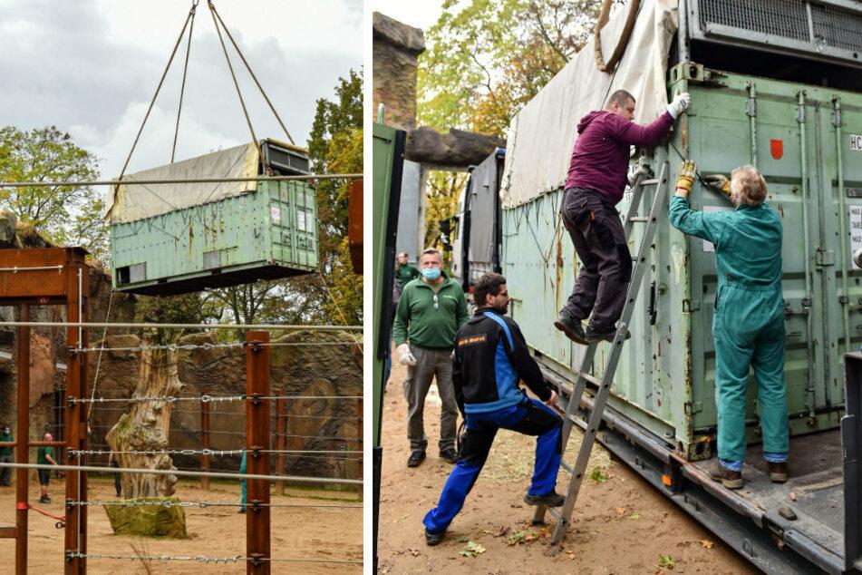 Auf Wiedersehen, Tembo! In diesem Container schwebt Tembo über dem Gehege (l.). Dann wird die Box mit dem Elefanten verladen.
