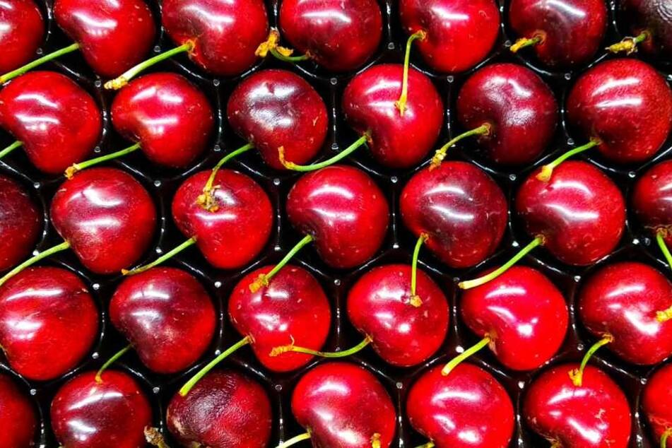 Kirschen belegen Platz 8 der beliebtesten Obstsorten der Deutschen