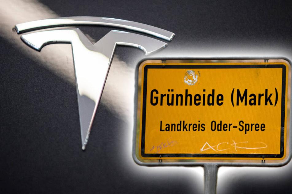 Berlin: Tesla in Brandenburg: Ab wann startet die Produktion?