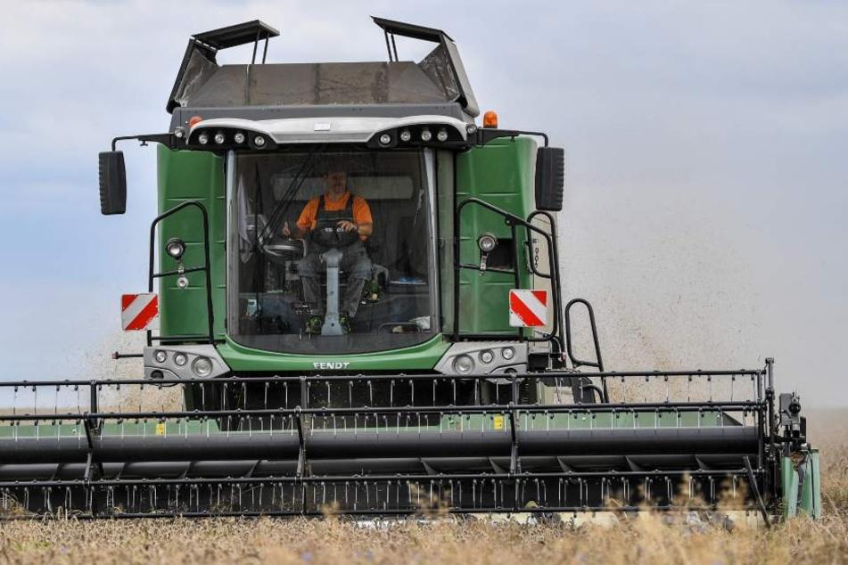 Der Fahrer einer Erntemaschine muss sich gegenüber der Polizei verantworten. (Symbolfoto).