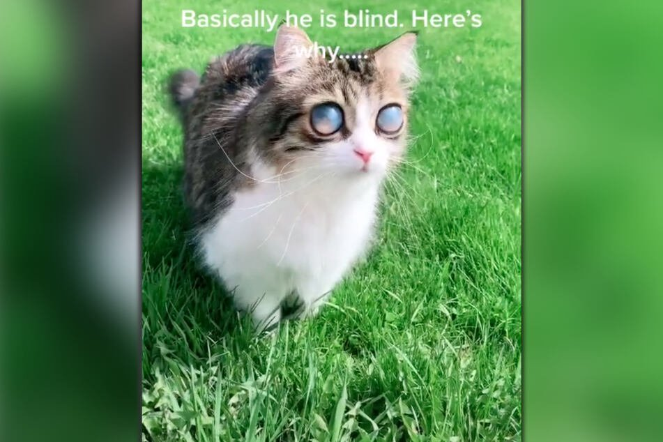 Pico the cat (9) has been blind for five years.