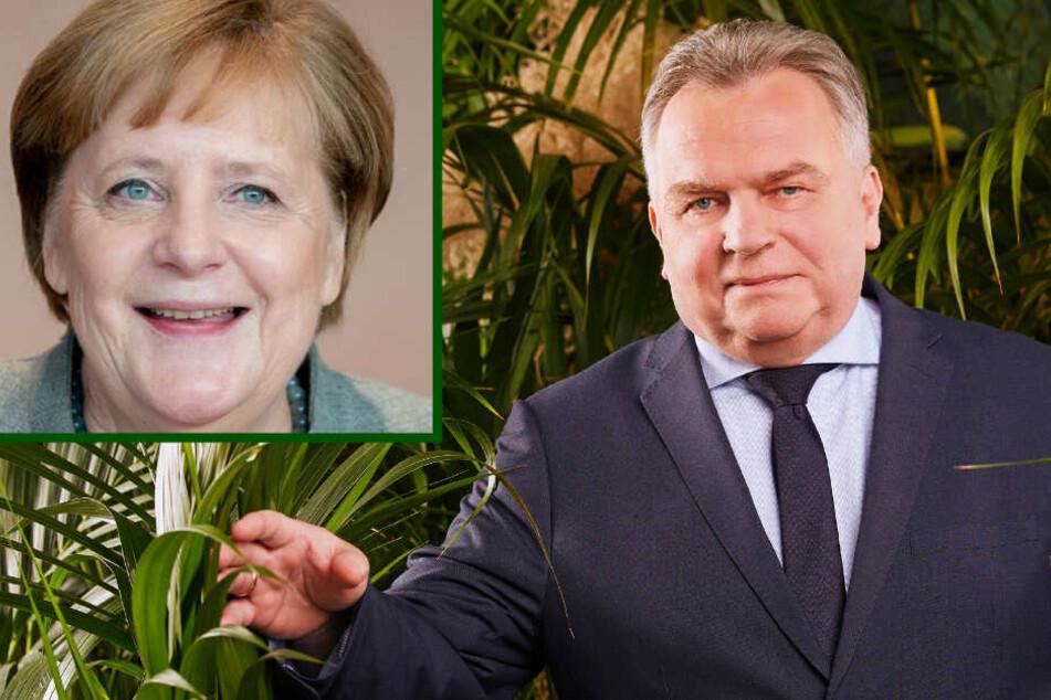 Dschungelcamp: Dschungelcamp: Kanzlerin Merkel gab FKK-Günni das Camp-Okay