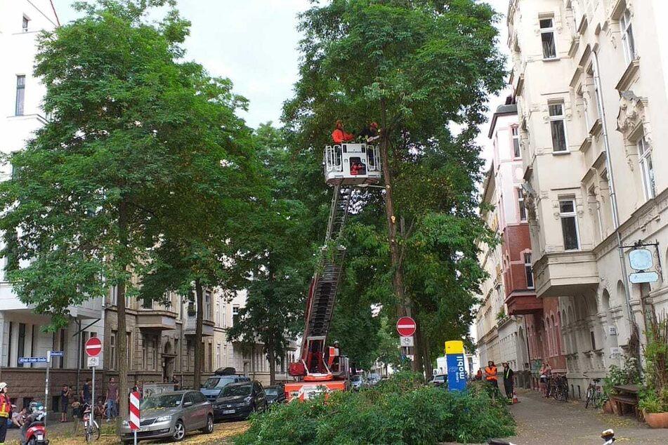 Auch im Westen der Messestadt kam die Feuerwehr an einem Baum zum Einsatz.