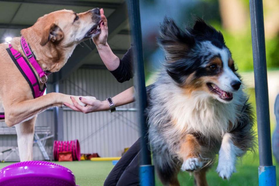 Dieses Training kann richtig schädlich für Hunde sein