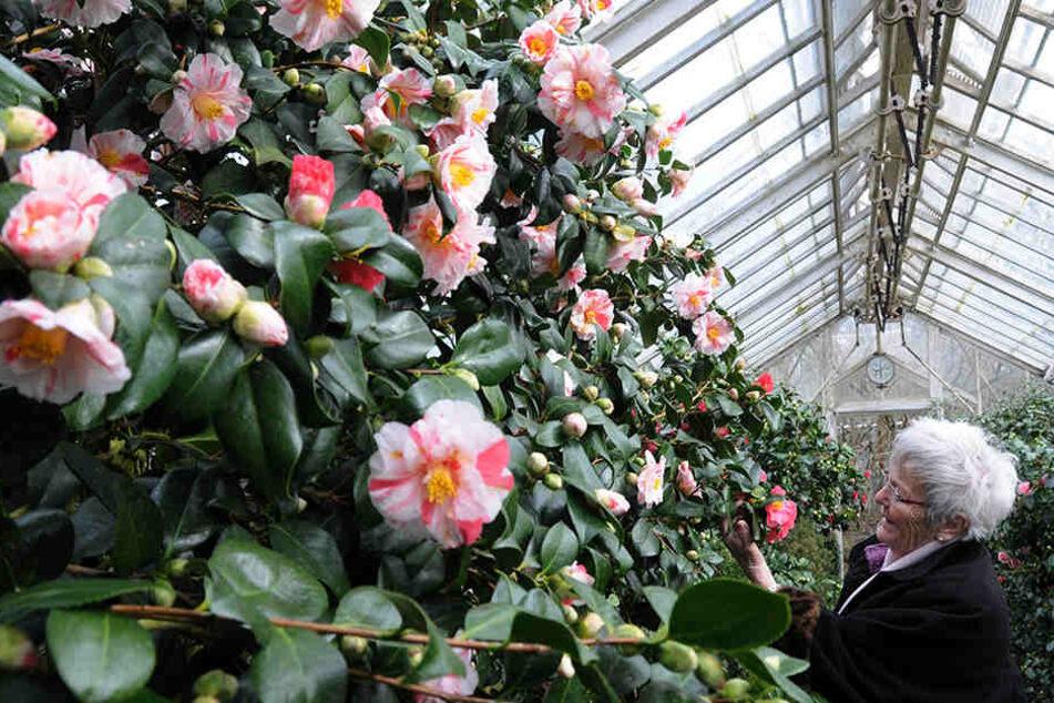 Blütenpracht auf Schloss Zuschendorf.