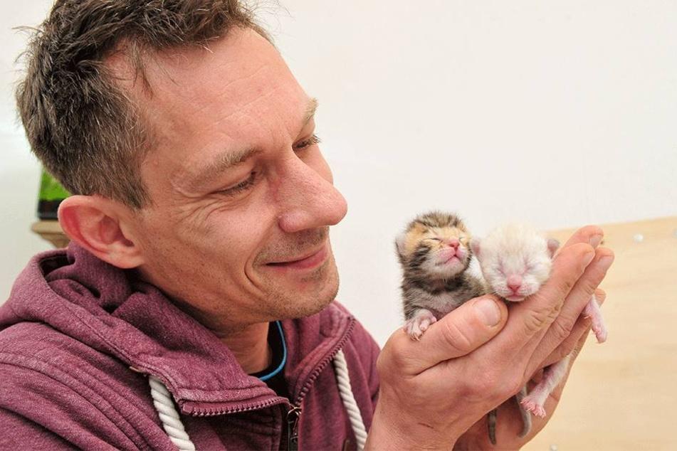 """Schöne Bescherung: Moderator Karsten Kolliski (44) hat vier kleine Bengalkatzen-Babys """"bekommen""""."""