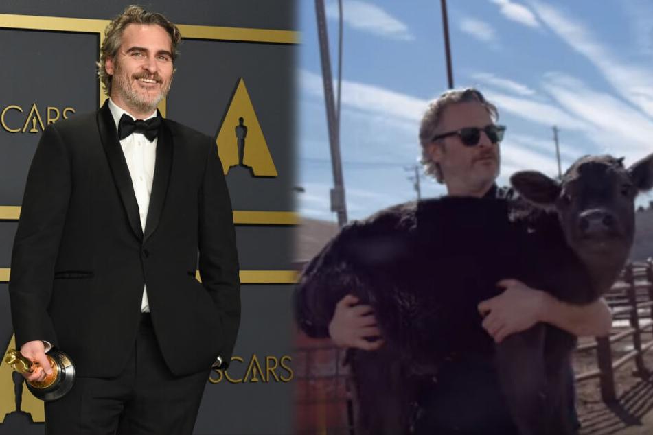 Rührend: Oscar-Gewinner rettet Kälbchen und seine Mama vor dem Tod