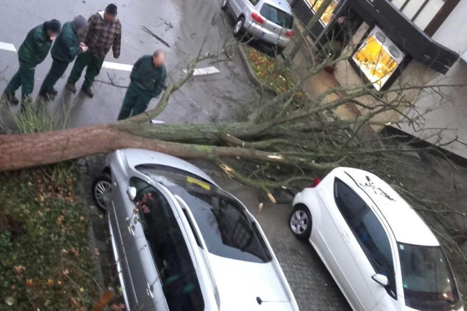 In Stuttgart-Möhringen beschädigte ein umgestürzter Baum zwei Autos.