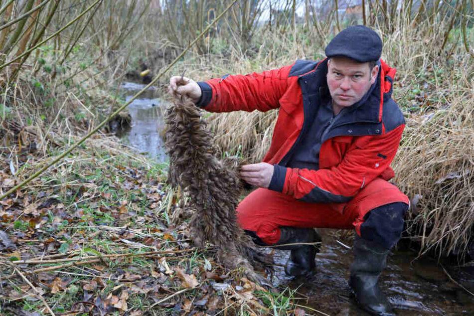 Züchter Marco Heym (41) blieb nur dieses Stück Fell übrig.