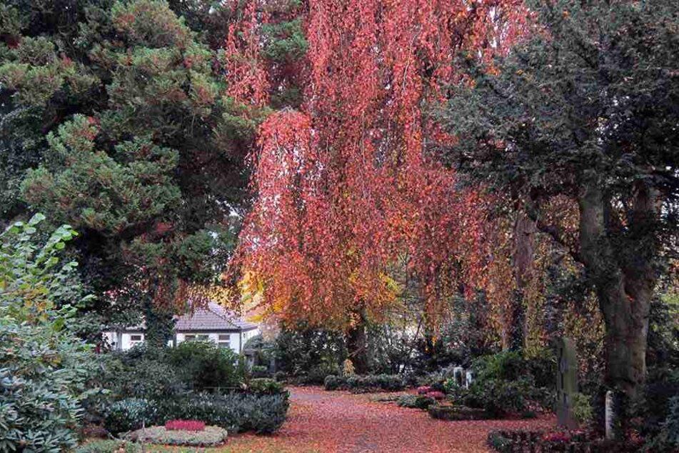 Vor über 100 Jahren wurden zahlreiche Bäume gepflanzt.