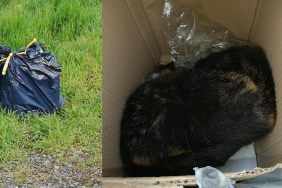 Die Katze steckte mit einer Tüte über dem Kopf in einem Karton, der mit ihrem Blut verschmiert war.