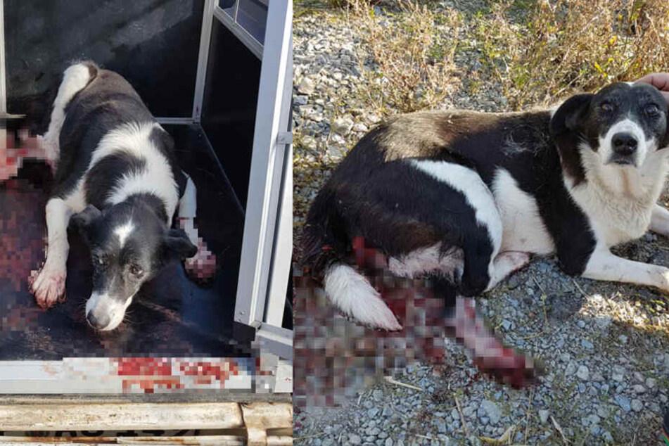 Der Hund lag in seiner eigenen Blutlache.