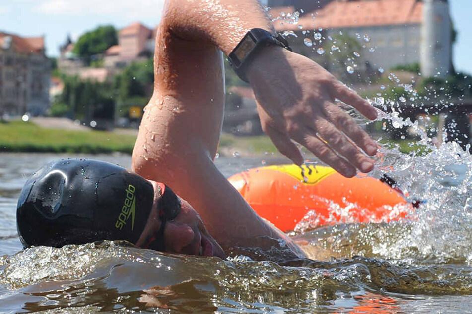 Training in der Elbe: Für vier Kilometer braucht Joseph Heß etwas mehr als eine Stunde.