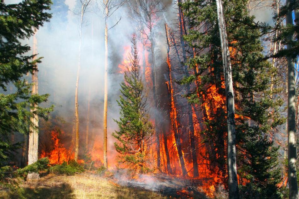 Die Wälder Brandenburgs könnten bald brennen. (Symbolbild)