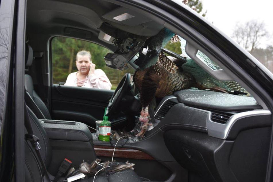 Im US-Bundesstaat Indiana krachte ein Truthahn durch die Frontscheibe eines Autos.