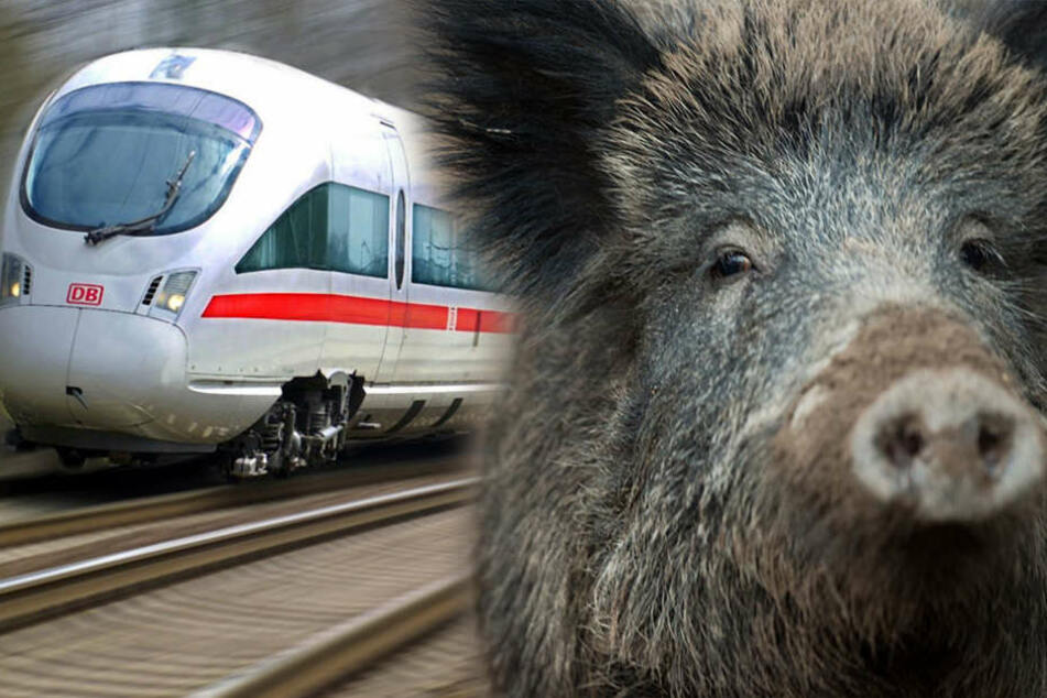 Vor Luckenwalde erwischte ein ICE ein Wildschwein und musste eine knappe Stunde stoppen.