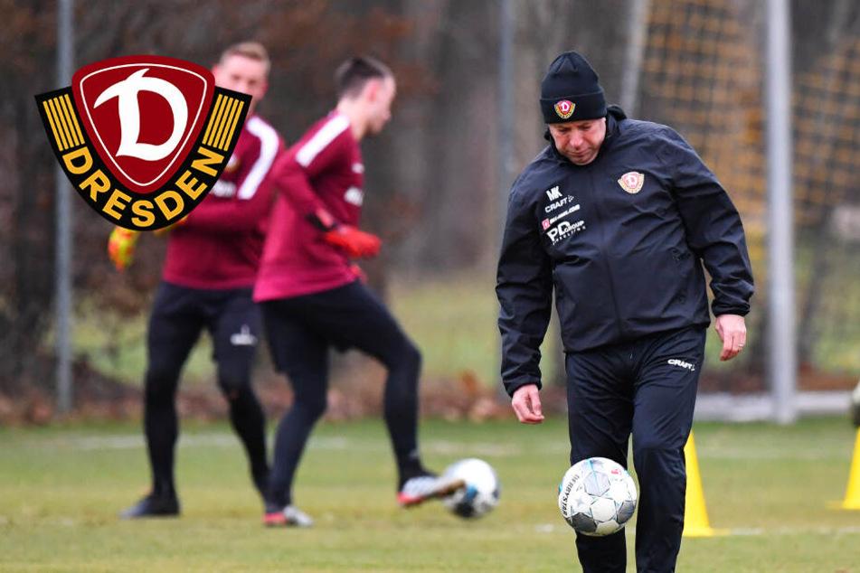 """Dynamo-Coach Kauczinski im Interview: War es das mit Neuzugängen? """"Absolut nicht""""!"""