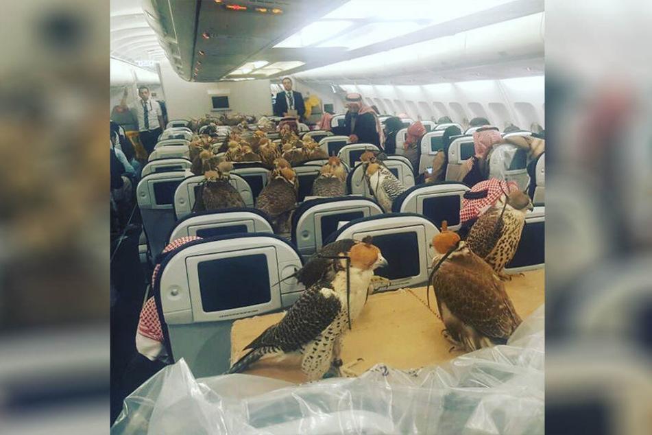 Ein seltsamer Anblick: In einem Flugzeug über den Vereinigten Arabischen Emiraten sitzen 80 Falken.